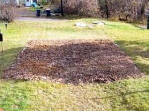 Выбор садового участка