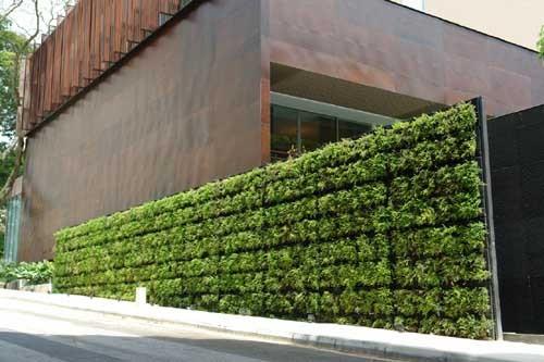 Зеленая стена — прекрасное украшение для вашего дома